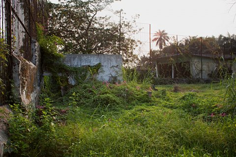 Lion's Den. Kinshasa.