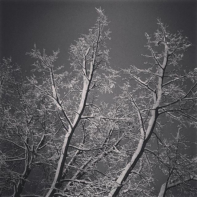 #snow #hadtodoit #night #indiana #elkhart #usa #enroutetomn #letitsnow #winter