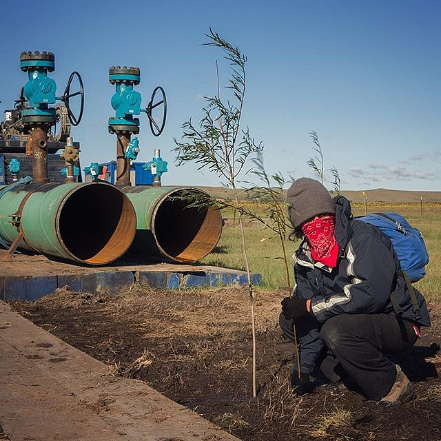 A participant of a #NoDAPLE action near Cannon Ball, N.D. plants a willow tree in the path of the Dakota Access Pipeline on Sept. 25, 2016. The willow trees represent the protection of the land and water that is being fought for by protesters of the pipel