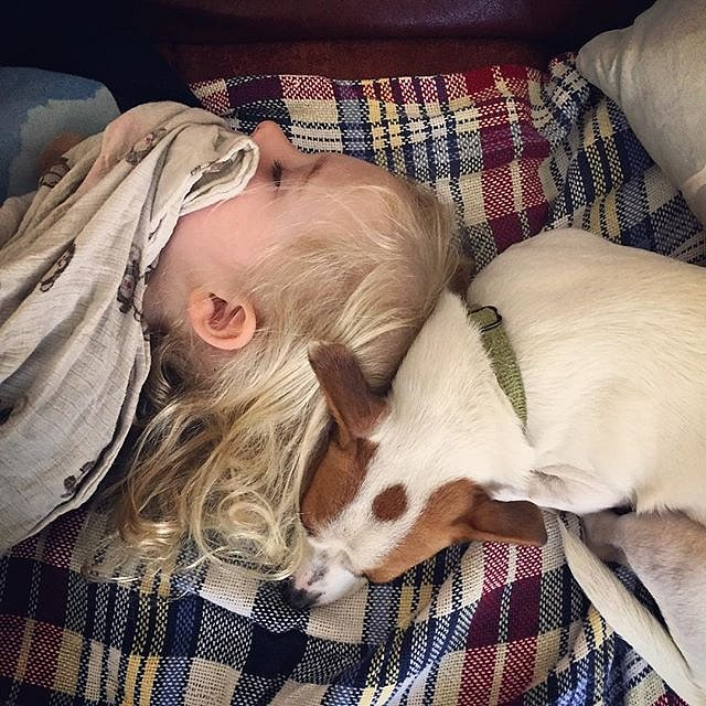 #puppies #nap #brooklyn #family #peace #errol