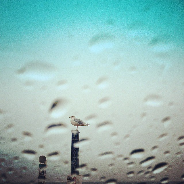 #weekend #family #beach #eastend #rain #seagull #sea #newyork #usa