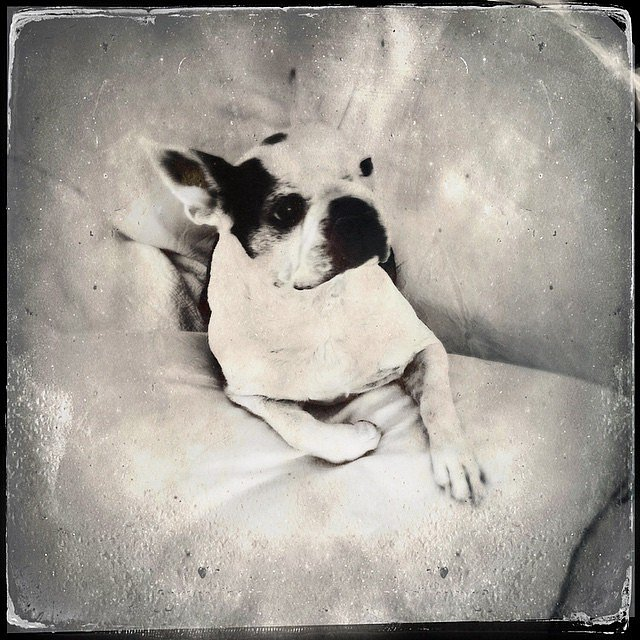 Rainy day exploring the #TinType app by #Hipstamatic. #home #weekend #family #normajean #brooklyn #newyork #usa #bostonterrier