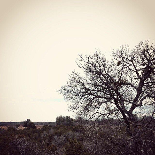 Good morning, Texas. #valleymills #texas #usa #family #holiday #backyard