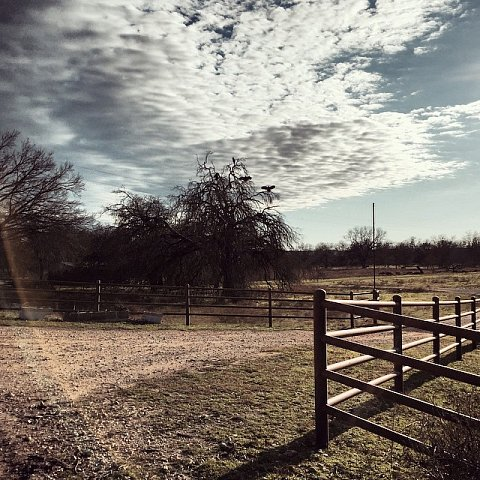 #texas #valleymills #usa #family #holiday #sunningbuzzard