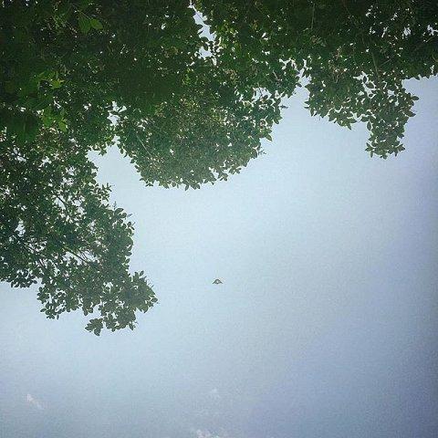 #governorsisland #newyork #usa #timeout #family #friends #peace #summer #kite