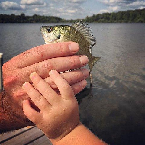 #errol #cottage #minnesota #midwest #summer #family #usa #onthelake #fish