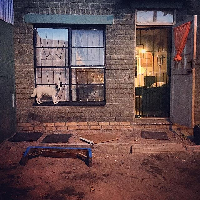 That doggie in the window, the one with the waggly tail... #manenberg #southafrica #capeflats #dog #window #eveningwalk #capetown #lovefrommanenberg