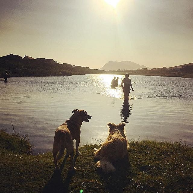 Epic evening swim. #southafrica #bettysbay #africa #swim #evening #dogsofinstagram #grateful