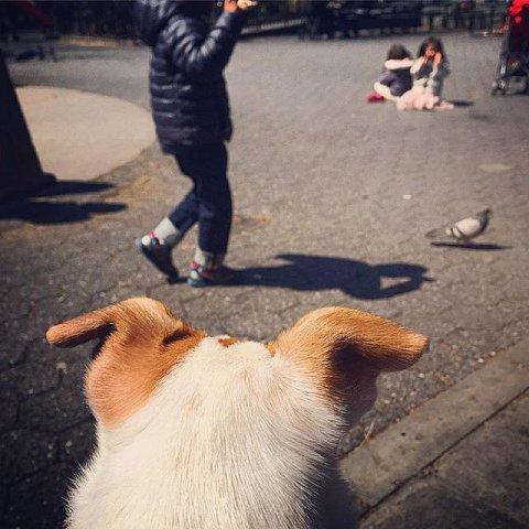 #park #family #pigeon #dog #weekend #brooklyn
