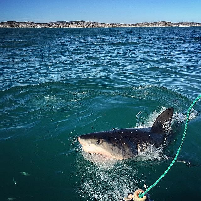 Today I swam with the fishes. #southafrica  #gansbaai #greatwhiteshark #epic
