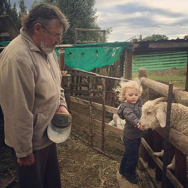 Feeding the goats is serious business @karookhaya. Thank you, @samreinders, @megan_reinders, and Pete for making Errol's farm dreams come to life. #princealbert #southafrica #karoo #friends #family #farm #goats #hairflying