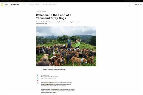 """""""Welcome to the Land of a Thousand Stray Dogs"""" <br>Writing published November 2, 2017.<br>  <a href=""""https://www.nationalgeographic.com/photography/proof/2017/11/land-of-strays/"""">View Article</a>"""