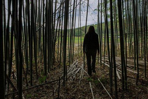 Sarah Burkey walks though a bamboo forest at Kituwah. <br>Cherokee, North Carolina, October 2017.