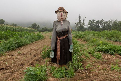 A scarecrow stands guard over a garden at Kituwah. <br>August 2017.